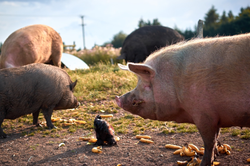 Friend Farm Animal Sanctuary Photos everyone eats together